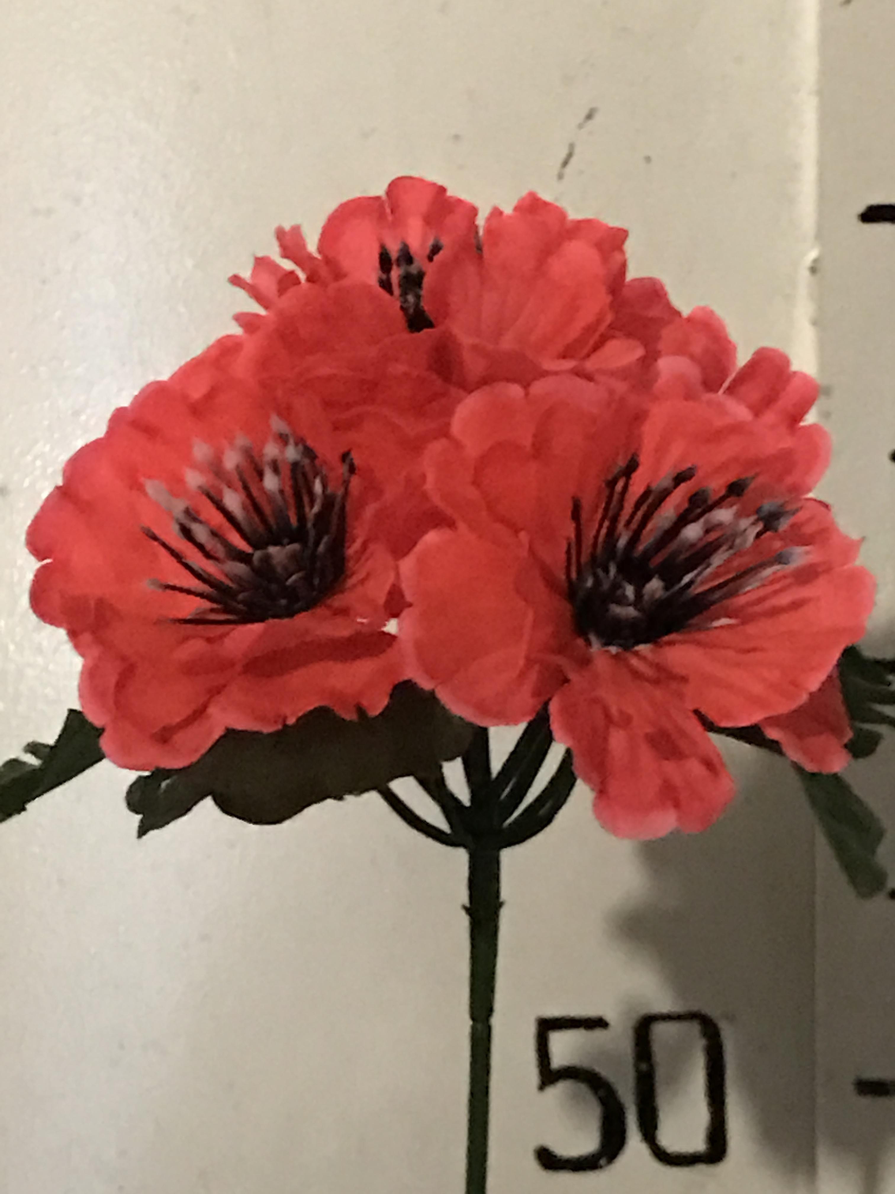 Хмельницкий цветы оптом